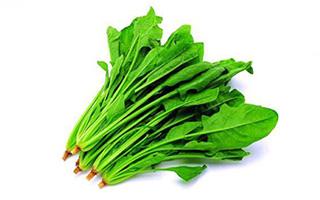 冬季适合吃哪些蔬菜-菠菜